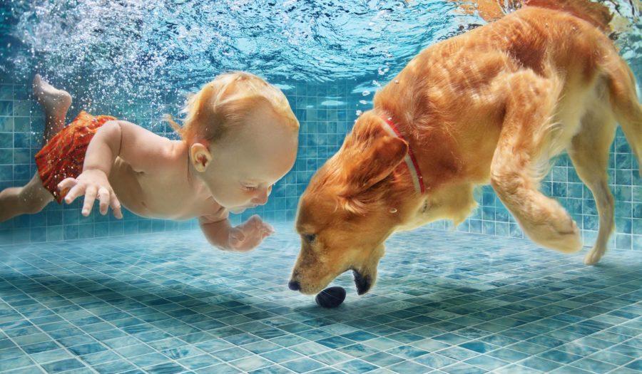 με το σκύλο σας στην πισίνα